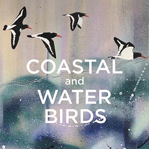 Coastal and Water Birds