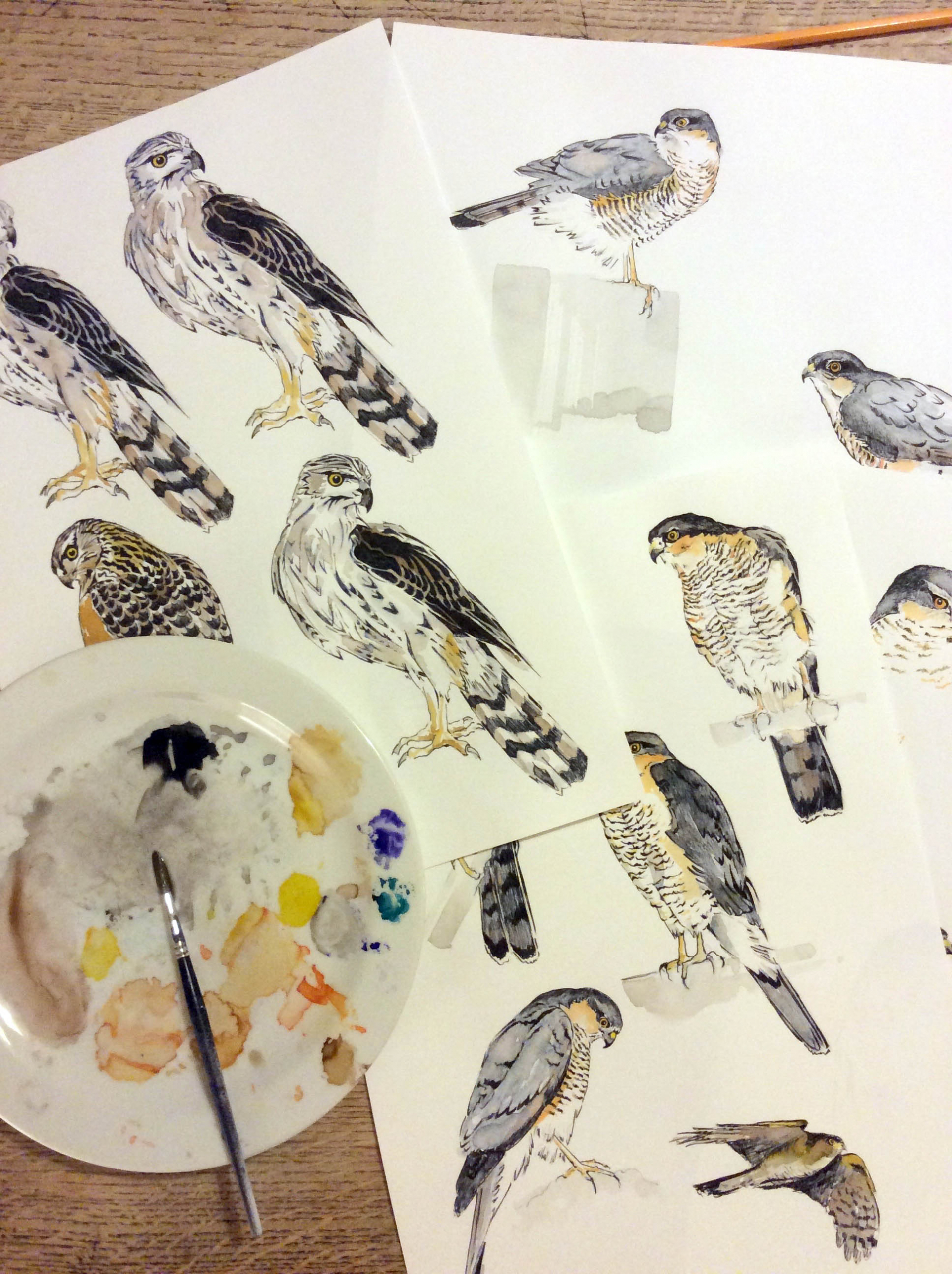 raptor drawings